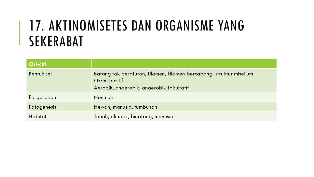 17. AKTINOMISETES DAN ORGANISME YANG SEKERABAT Ciri-ciri Bentuk selBatang tak beraturan, filamen, filamen bercabang, struktur miselium Gram positif Ae