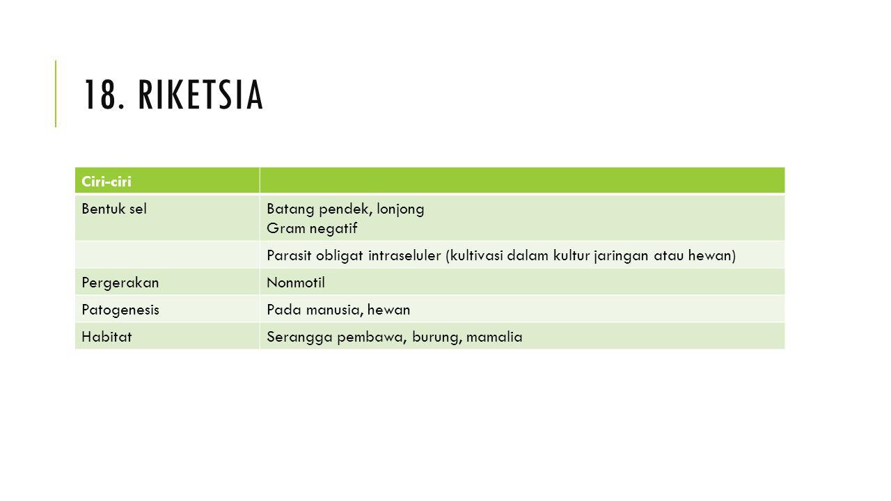 18. RIKETSIA Ciri-ciri Bentuk selBatang pendek, lonjong Gram negatif Parasit obligat intraseluler (kultivasi dalam kultur jaringan atau hewan) Pergera