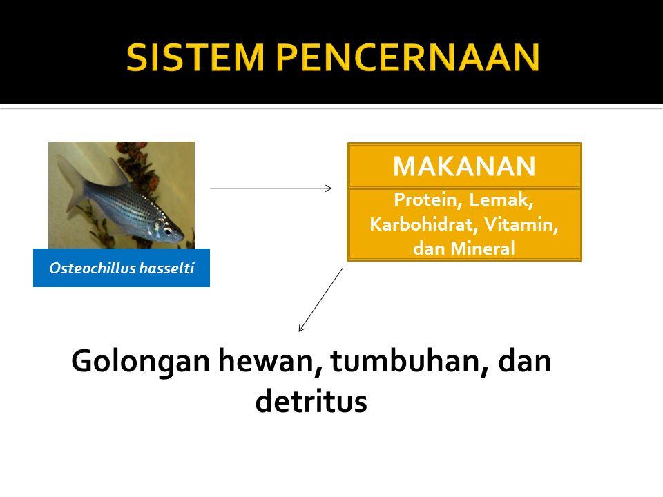 Protein, Lemak, Karbohidrat, Vitamin, dan Mineral MAKANAN Osteochillus hasselti