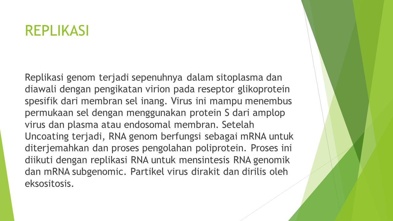 PATHOGENESIS  Infeksi koronavirus pada manusia merupakan patogen yang dapat menimbulkan penyakit yang ditandai dengan destruksi sel epitel dan kehilangan kemampuan absorptif.