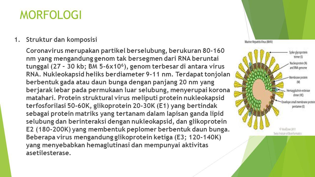 MORFOLOGI 1. Struktur dan komposisi Coronavirus merupakan partikel berselubung, berukuran 80-160 nm yang mengandung genom tak bersegmen dari RNA berun