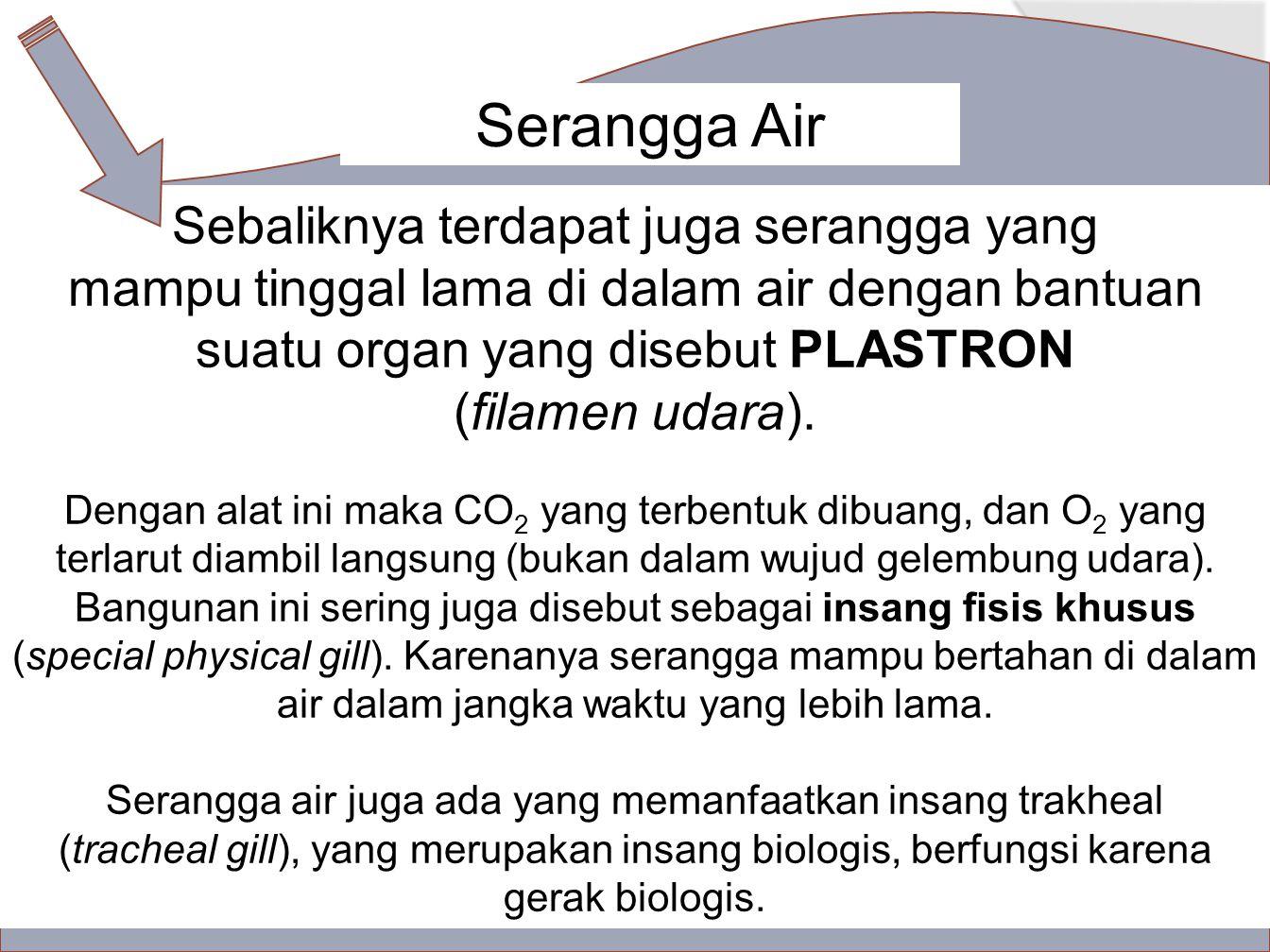 Sebaliknya terdapat juga serangga yang mampu tinggal lama di dalam air dengan bantuan suatu organ yang disebut PLASTRON (filamen udara).