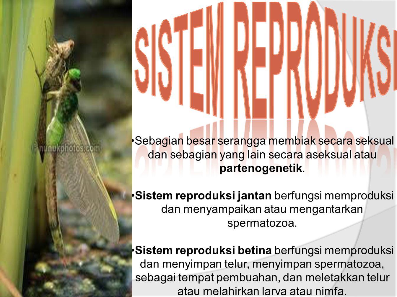 Sebagian besar serangga membiak secara seksual dan sebagian yang lain secara aseksual atau partenogenetik.