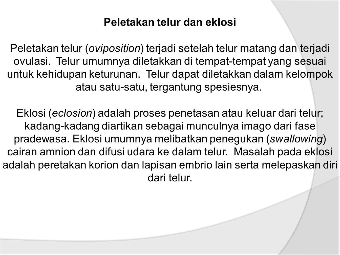 Peletakan telur dan eklosi Peletakan telur (oviposition) terjadi setelah telur matang dan terjadi ovulasi.