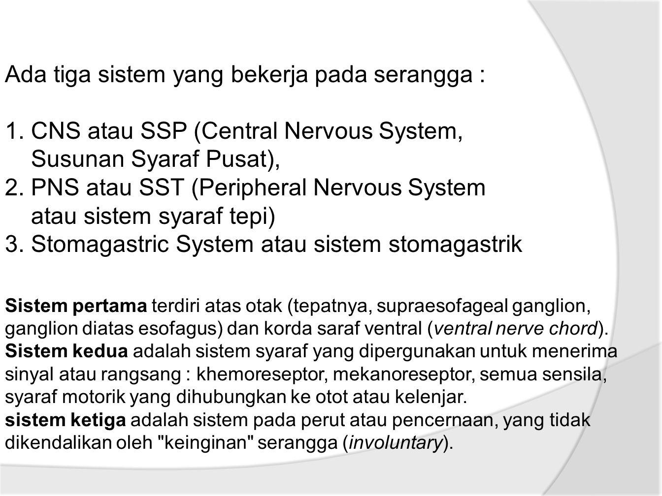 Ada tiga sistem yang bekerja pada serangga : 1.