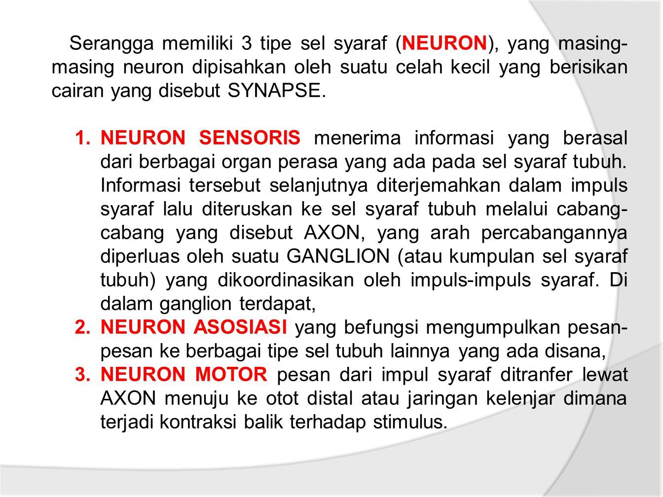 Serangga memiliki 3 tipe sel syaraf (NEURON), yang masing- masing neuron dipisahkan oleh suatu celah kecil yang berisikan cairan yang disebut SYNAPSE.