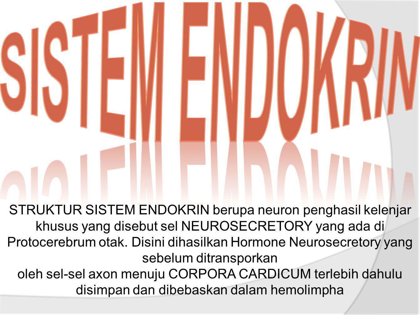 STRUKTUR SISTEM ENDOKRIN berupa neuron penghasil kelenjar khusus yang disebut sel NEUROSECRETORY yang ada di Protocerebrum otak.