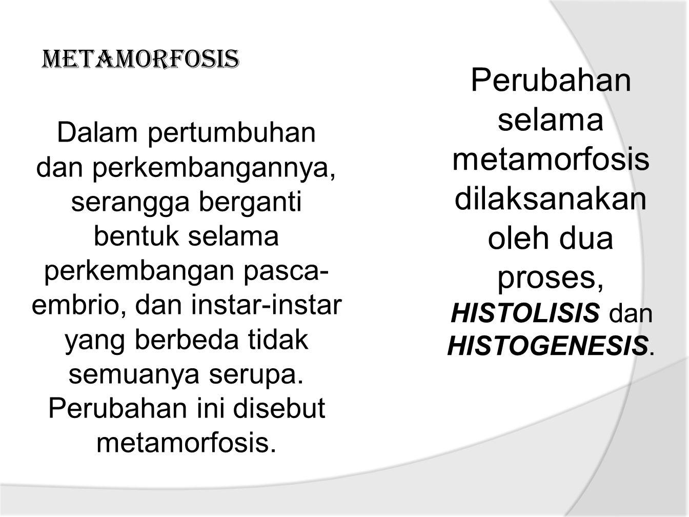 METAMORFOSIS Dalam pertumbuhan dan perkembangannya, serangga berganti bentuk selama perkembangan pasca- embrio, dan instar-instar yang berbeda tidak semuanya serupa.
