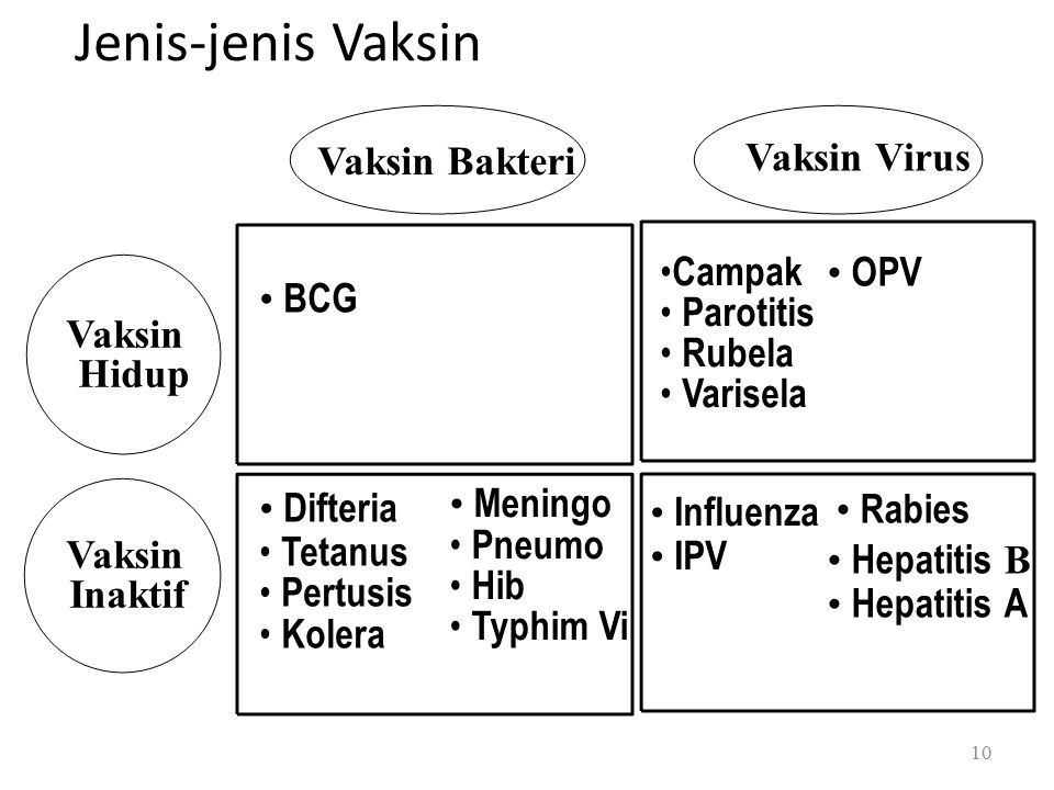 Vaksin Virus BCG Difteria Tetanus Pertusis Kolera Meningo Pneumo Hib Typhim Vi Campak Parotitis Rubela Varisela Influenza IPV OPV Rabies Hepatitis B Hepatitis A Vaksin Hidup Vaksin Inaktif Jenis-jenis Vaksin Vaksin Bakteri 10