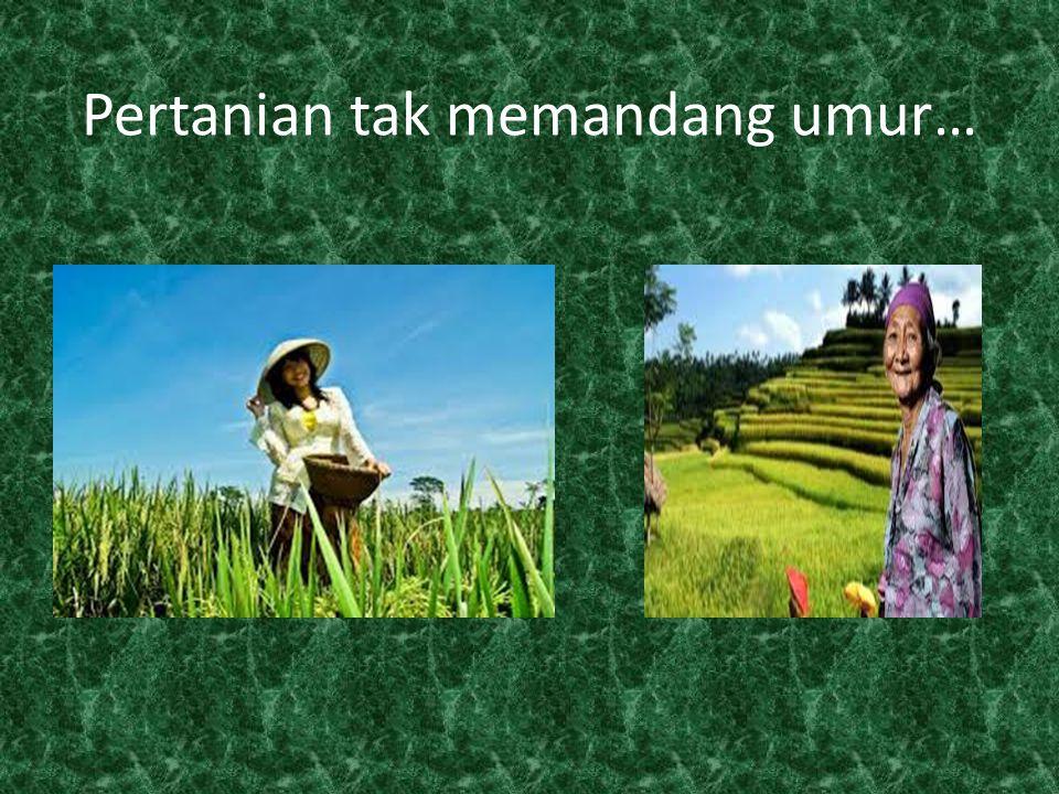 Pertanian tak memandang umur…