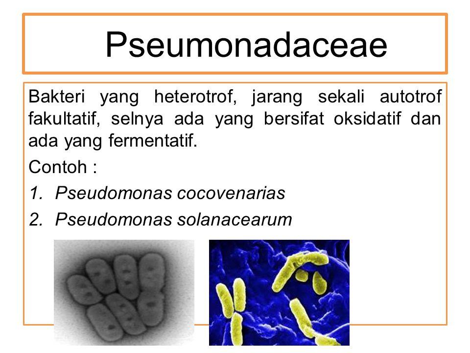 Pseumonadaceae Bakteri yang heterotrof, jarang sekali autotrof fakultatif, selnya ada yang bersifat oksidatif dan ada yang fermentatif.