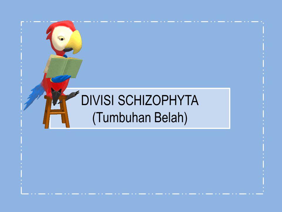 DIVISI SCHIZOPHYTA (Tumbuhan Belah)