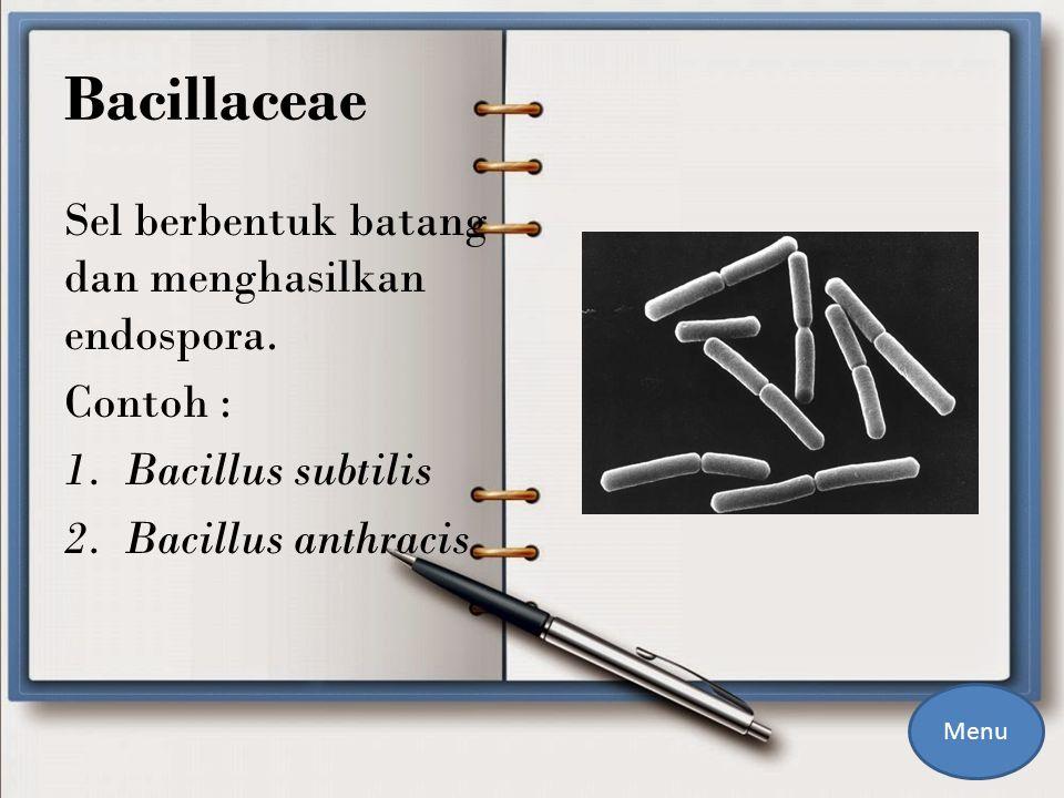 Bacillaceae Sel berbentuk batang dan menghasilkan endospora.