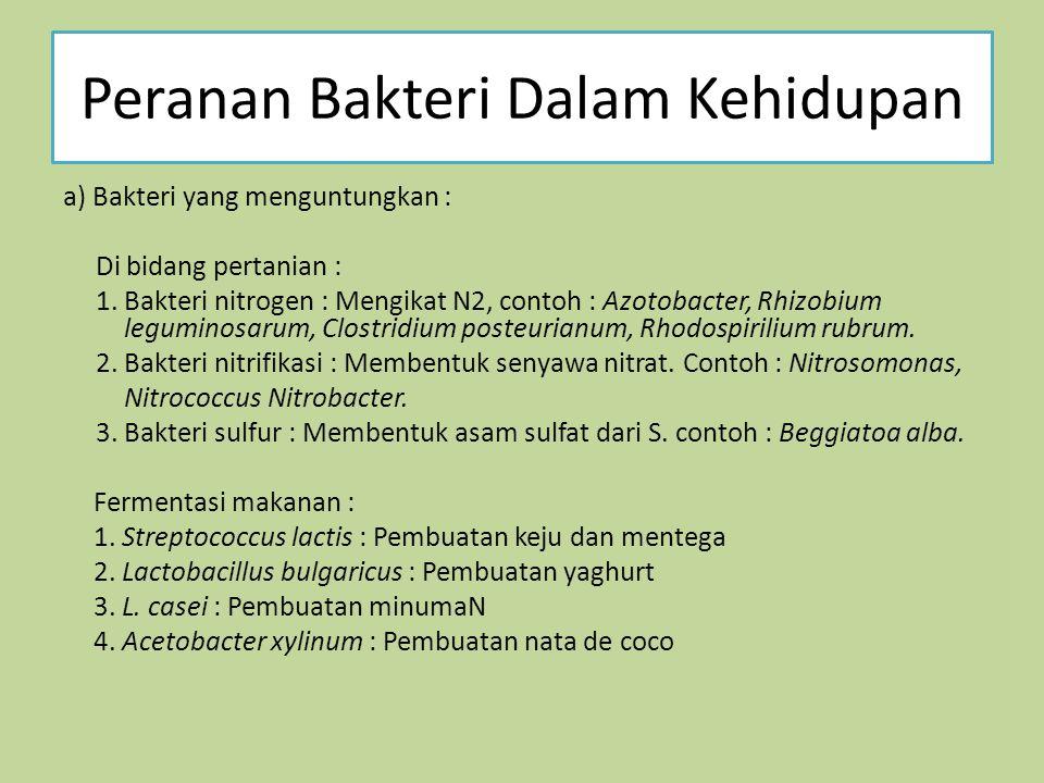 Peranan Bakteri Dalam Kehidupan a) Bakteri yang menguntungkan : Di bidang pertanian : 1.