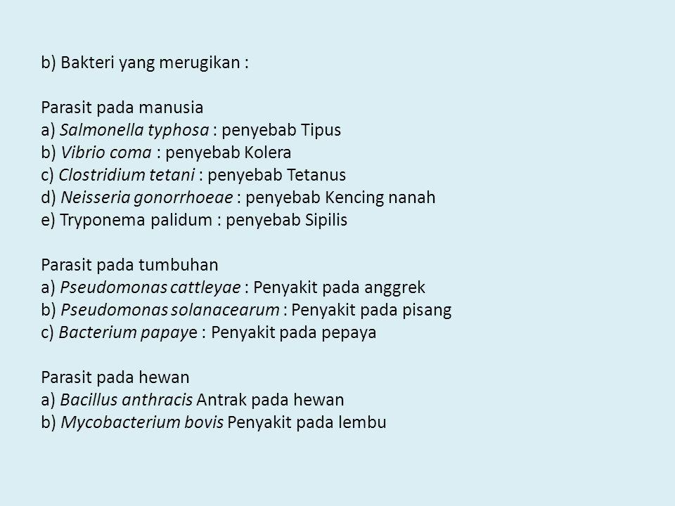 b) Bakteri yang merugikan : Parasit pada manusia a) Salmonella typhosa : penyebab Tipus b) Vibrio coma : penyebab Kolera c) Clostridium tetani : penyebab Tetanus d) Neisseria gonorrhoeae : penyebab Kencing nanah e) Tryponema palidum : penyebab Sipilis Parasit pada tumbuhan a) Pseudomonas cattleyae : Penyakit pada anggrek b) Pseudomonas solanacearum : Penyakit pada pisang c) Bacterium papaye : Penyakit pada pepaya Parasit pada hewan a) Bacillus anthracis Antrak pada hewan b) Mycobacterium bovis Penyakit pada lembu