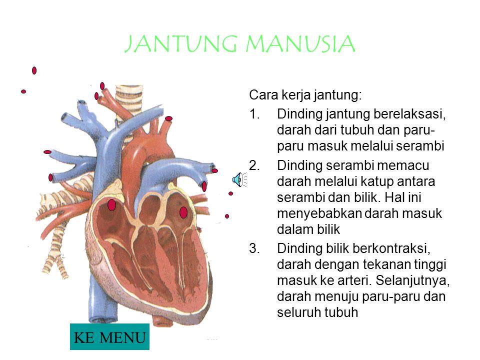 JANTUNG MANUSIA Cara kerja jantung: 1.Dinding jantung berelaksasi, darah dari tubuh dan paru- paru masuk melalui serambi 2.Dinding serambi memacu dara