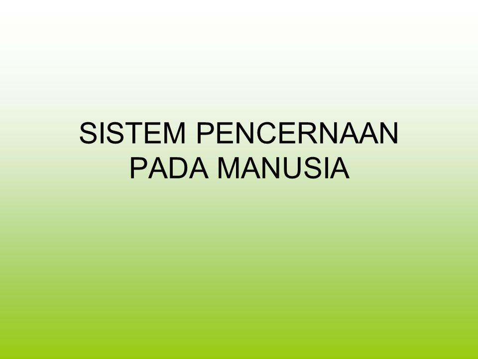 SMALL INTESTINE/INTESTINUM TENUE (USUS HALUS)