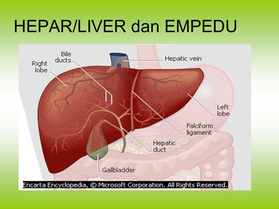 HEPAR/LIVER dan EMPEDU