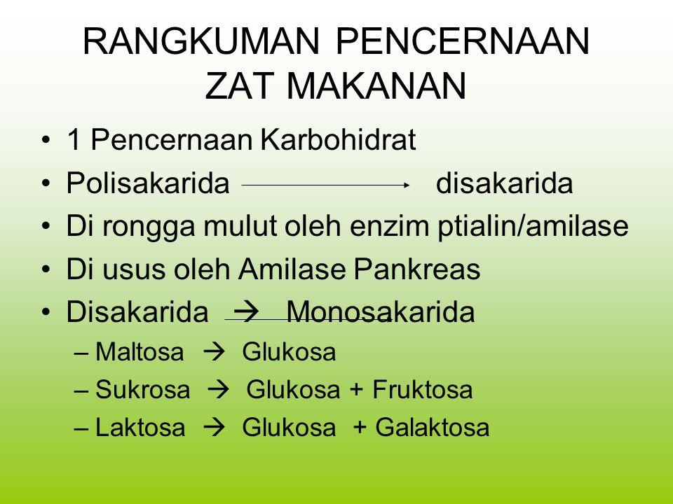RANGKUMAN PENCERNAAN ZAT MAKANAN 1 Pencernaan Karbohidrat Polisakarida disakarida Di rongga mulut oleh enzim ptialin/amilase Di usus oleh Amilase Pankreas Disakarida  Monosakarida –Maltosa  Glukosa –Sukrosa  Glukosa + Fruktosa –Laktosa  Glukosa + Galaktosa