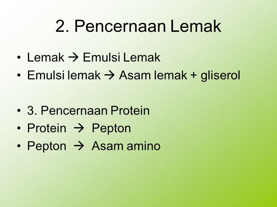 2. Pencernaan Lemak Lemak  Emulsi Lemak Emulsi lemak  Asam lemak + gliserol 3. Pencernaan Protein Protein  Pepton Pepton  Asam amino