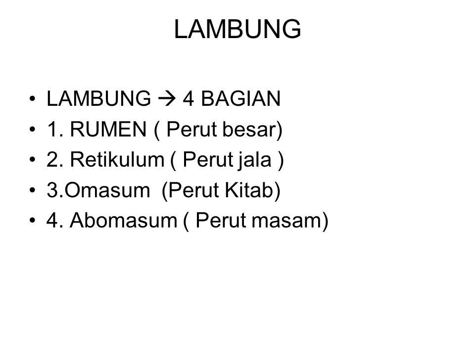 LAMBUNG LAMBUNG  4 BAGIAN 1. RUMEN ( Perut besar) 2. Retikulum ( Perut jala ) 3.Omasum (Perut Kitab) 4. Abomasum ( Perut masam)