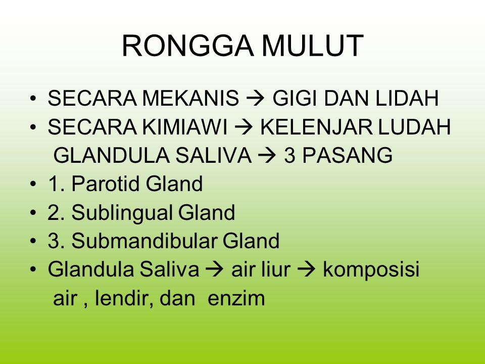 RONGGA MULUT SECARA MEKANIS  GIGI DAN LIDAH SECARA KIMIAWI  KELENJAR LUDAH GLANDULA SALIVA  3 PASANG 1. Parotid Gland 2. Sublingual Gland 3. Subman