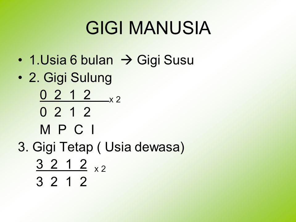 GIGI MANUSIA 1.Usia 6 bulan  Gigi Susu 2. Gigi Sulung 0 2 1 2 x 2 0 2 1 2 M P C I 3. Gigi Tetap ( Usia dewasa) 3 2 1 2 x 2 3 2 1 2