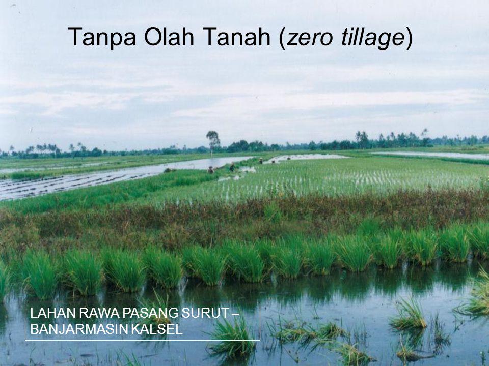 Tanpa Olah Tanah (zero tillage) LAHAN RAWA PASANG SURUT – BANJARMASIN KALSEL
