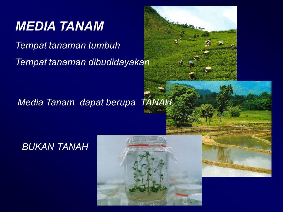 MEDIA TANAM Tempat tanaman tumbuh Tempat tanaman dibudidayakan Media Tanam dapat berupa TANAH BUKAN TANAH