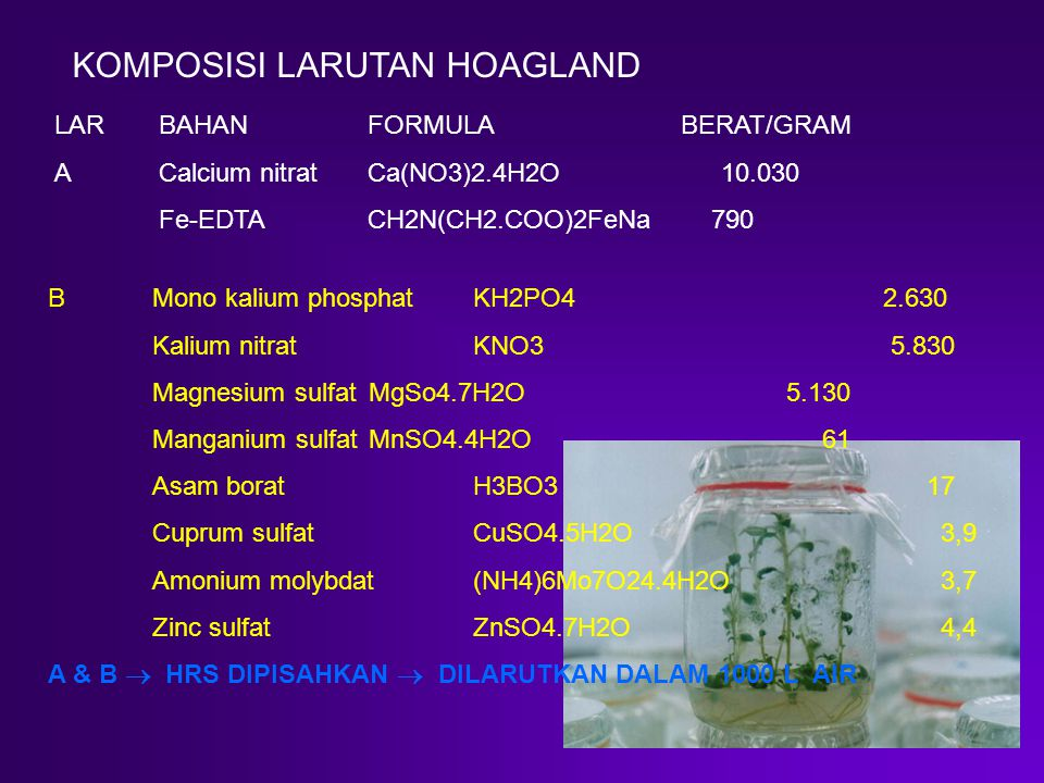 LAR BAHANFORMULABERAT/GRAM ACalcium nitratCa(NO3)2.4H2O 10.030 Fe-EDTACH2N(CH2.COO)2FeNa 790 BMono kalium phosphat KH2PO42.630 Kalium nitrat KNO3 5.830 Magnesium sulfat MgSo4.7H2O 5.130 Manganium sulfat MnSO4.4H2O 61 Asam borat H3BO3 17 Cuprum sulfat CuSO4.5H2O 3,9 Amonium molybdat (NH4)6Mo7O24.4H2O 3,7 Zinc sulfat ZnSO4.7H2O 4,4 A & B  HRS DIPISAHKAN  DILARUTKAN DALAM 1000 L AIR KOMPOSISI LARUTAN HOAGLAND