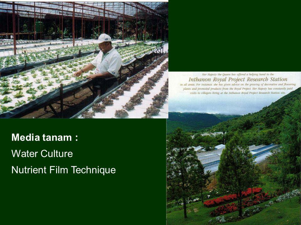 Media tanam : Water Culture Nutrient Film Technique