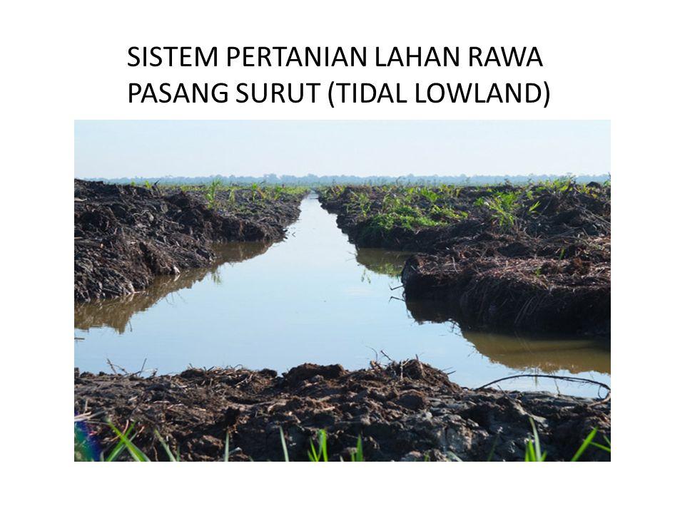 Lahan Rawa Potensial dan Sulfat Masam Lahan rawa yang tidak memiliki lapisan tanah gambut dan tidak memiliki lapisan pirit (kadarnya <0,75%), atau memiliki lapisan pirit pada kedalaman lebih dari 50 cm disebut sebagai lahan rawa potensial.