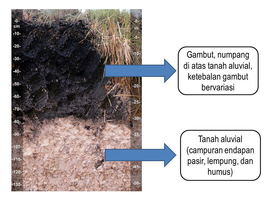 Gambut, numpang di atas tanah aluvial, ketebalan gambut bervariasi Tanah aluvial (campuran endapan pasir, lempung, dan humus)