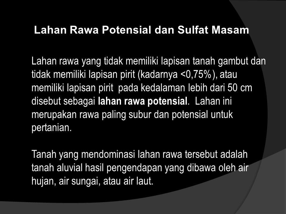 Lahan Rawa Potensial dan Sulfat Masam Lahan rawa yang tidak memiliki lapisan tanah gambut dan tidak memiliki lapisan pirit (kadarnya <0,75%), atau mem