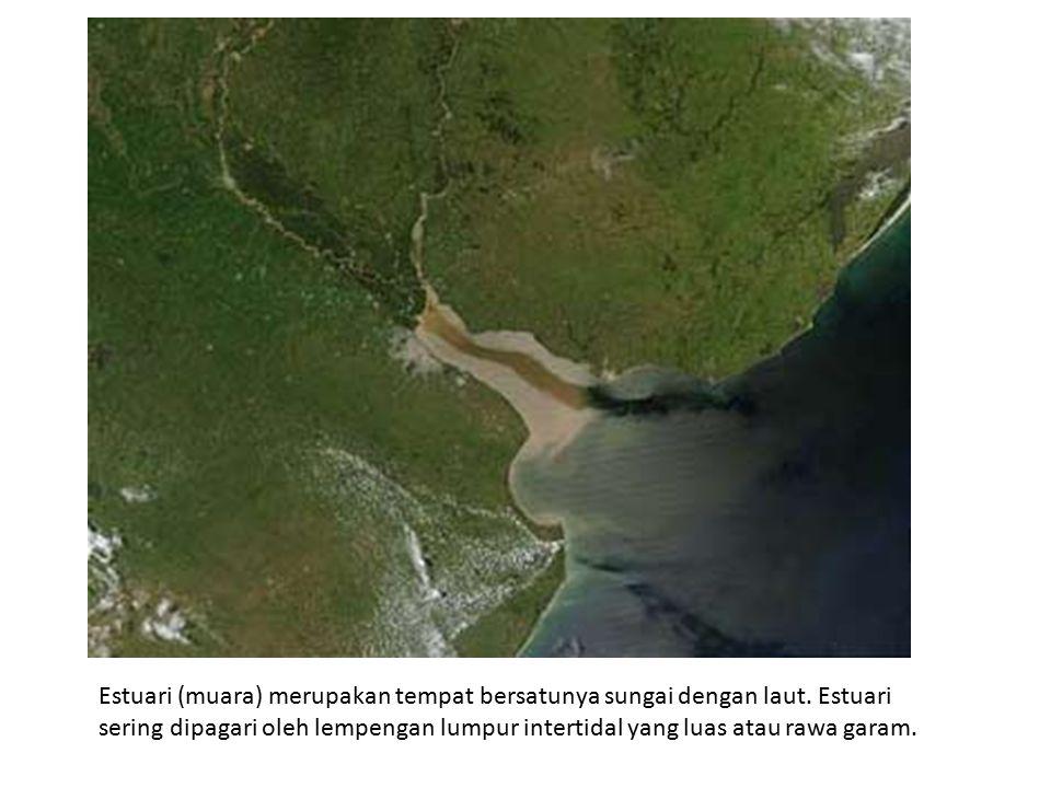 Estuari (muara) merupakan tempat bersatunya sungai dengan laut. Estuari sering dipagari oleh lempengan lumpur intertidal yang luas atau rawa garam.