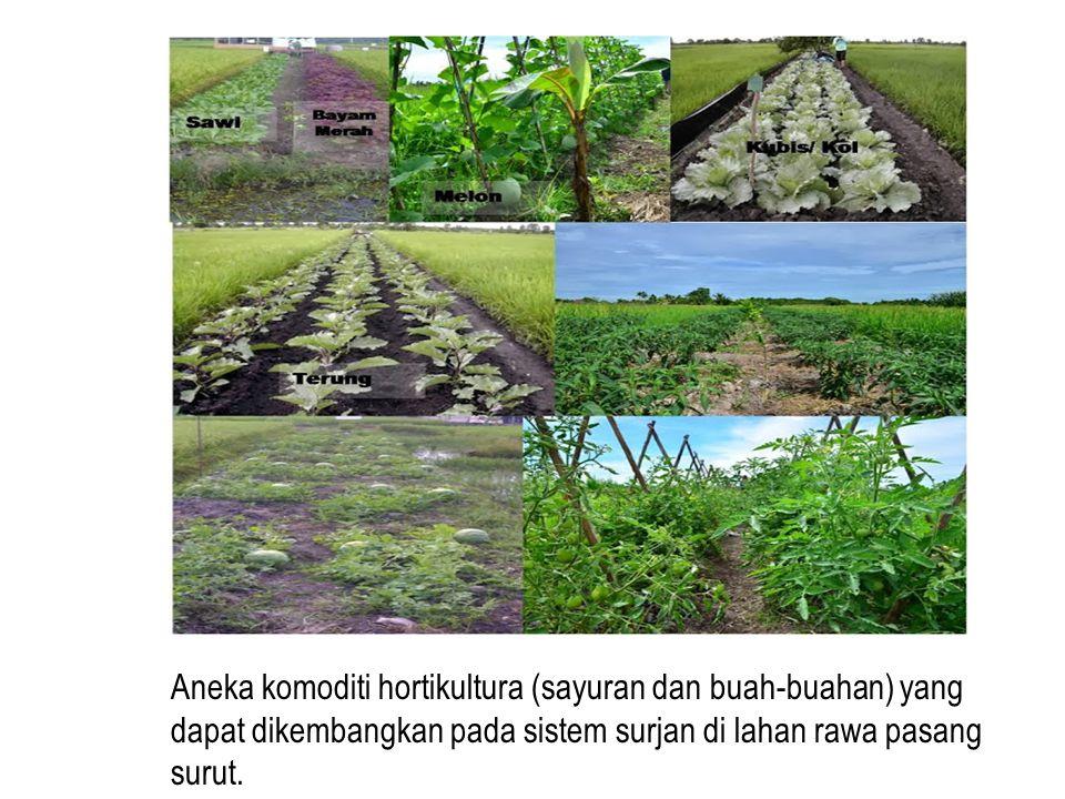 Aneka komoditi hortikultura (sayuran dan buah-buahan) yang dapat dikembangkan pada sistem surjan di lahan rawa pasang surut.