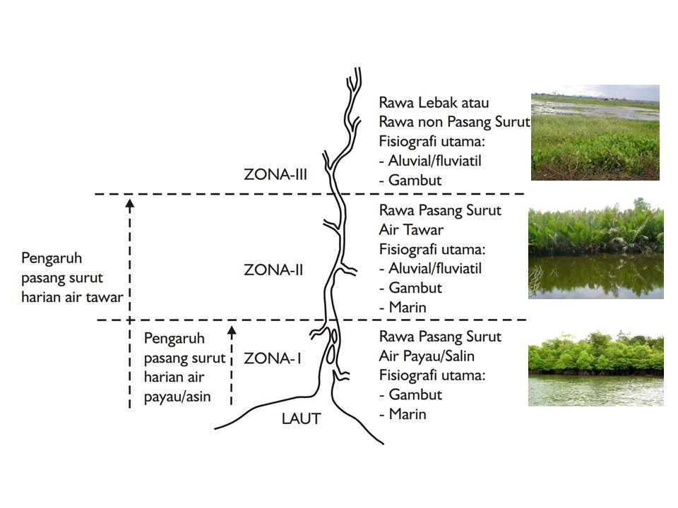 Rawa pasang surut merupakan lahan rawa yang genangannya dipengaruhi oleh pasang surutnya air laut Zona I - Rawa pasang surut
