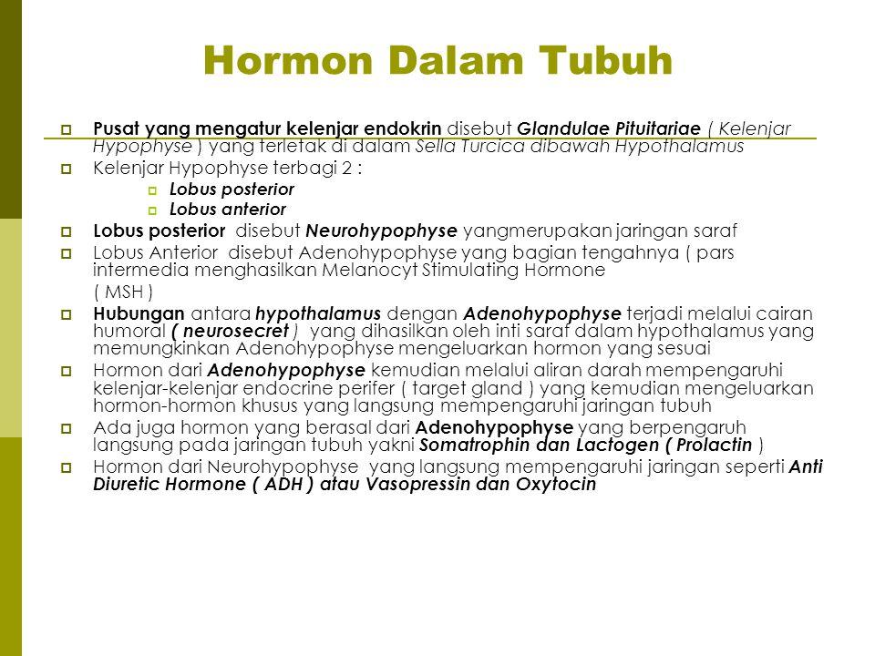 Hormon Dalam Tubuh  Pusat yang mengatur kelenjar endokrin disebut Glandulae Pituitariae ( Kelenjar Hypophyse ) yang terletak di dalam Sella Turcica d