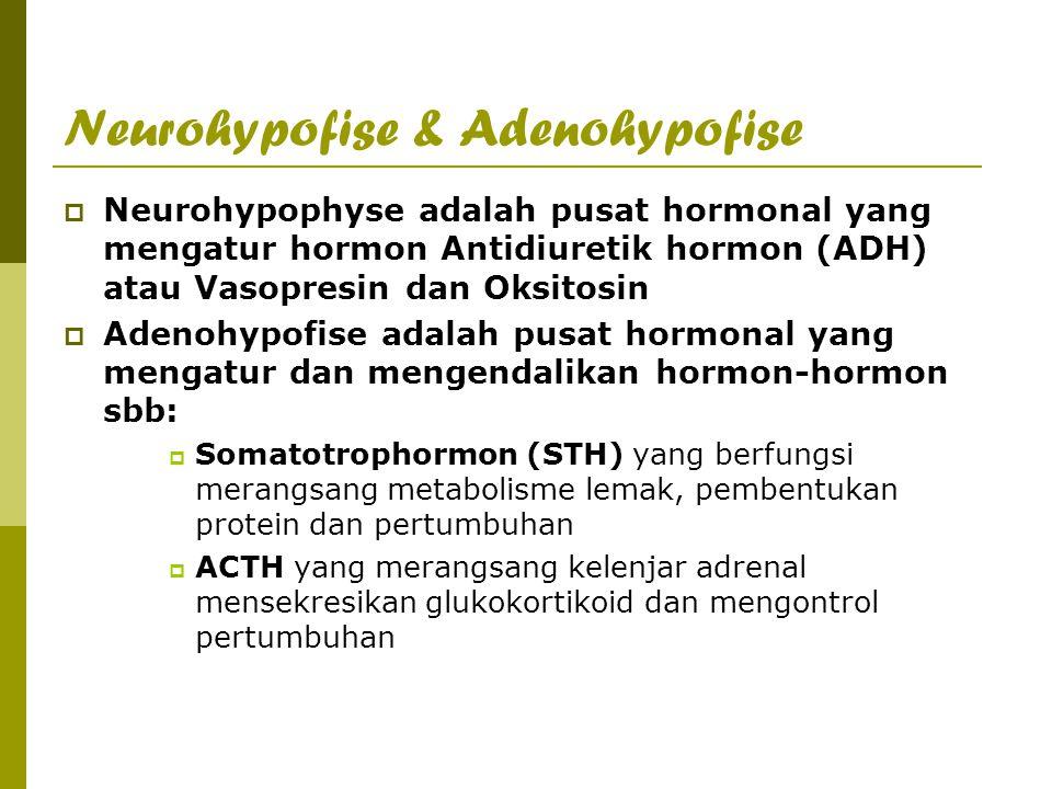 Neurohypofise & Adenohypofise  Neurohypophyse adalah pusat hormonal yang mengatur hormon Antidiuretik hormon (ADH) atau Vasopresin dan Oksitosin  Ad