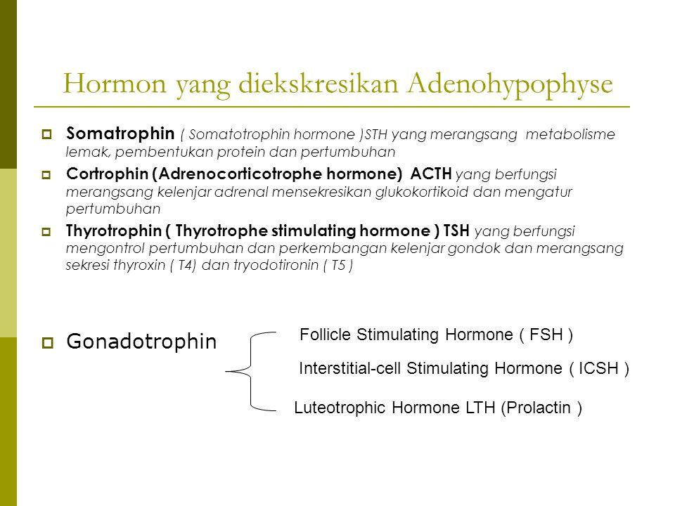 Hormon yang diekskresikan Adenohypophyse  Somatrophin ( Somatotrophin hormone )STH yang merangsang metabolisme lemak, pembentukan protein dan pertumb