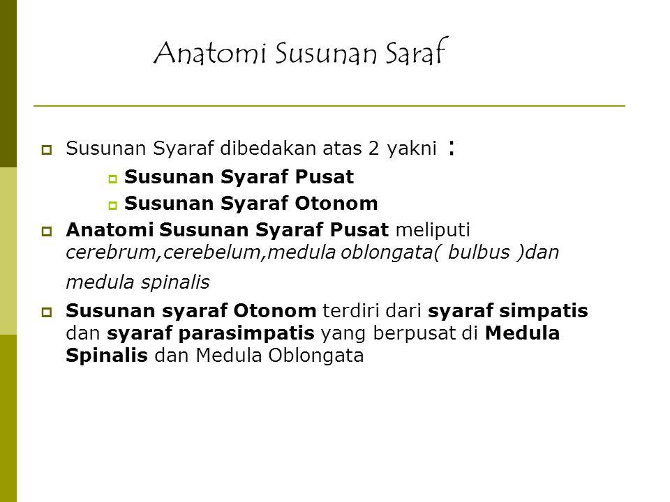  Susunan Syaraf dibedakan atas 2 yakni :  Susunan Syaraf Pusat  Susunan Syaraf Otonom  Anatomi Susunan Syaraf Pusat meliputi cerebrum,cerebelum,me