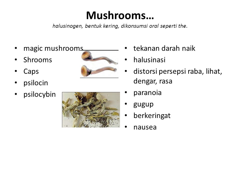 Mushrooms… halusinogen, bentuk kering, dikonsumsi oral seperti the. magic mushrooms Shrooms Caps psilocin psilocybin tekanan darah naik halusinasi dis