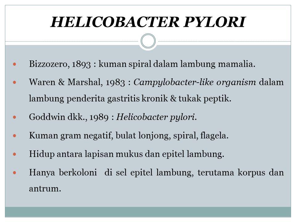 HELICOBACTER PYLORI Bizzozero, 1893 : kuman spiral dalam lambung mamalia. Waren & Marshal, 1983 : Campylobacter-like organism dalam lambung penderita
