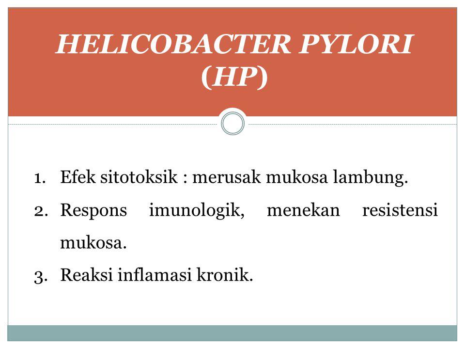 HELICOBACTER PYLORI (HP) 1.Efek sitotoksik : merusak mukosa lambung. 2.Respons imunologik, menekan resistensi mukosa. 3.Reaksi inflamasi kronik.