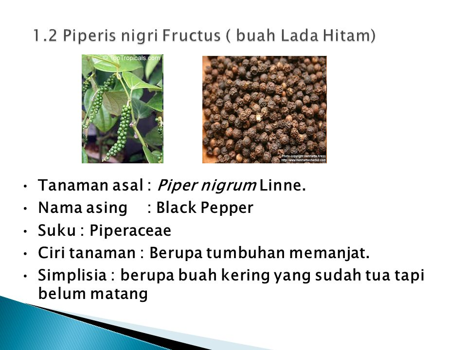 Tanaman asal : Piper nigrum Linne. Nama asing : Black Pepper Suku : Piperaceae Ciri tanaman : Berupa tumbuhan memanjat. Simplisia : berupa buah kering