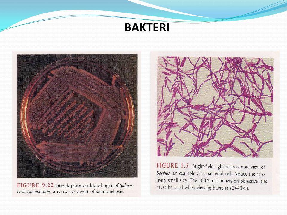 Jenis-Jenis Mikroorganisme