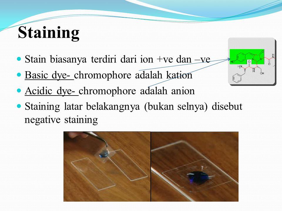 Persiapan smear untuk proses staining/pewarnaan Pewarnaan-staining mikroba dengan zat pewarna (dye) untuk memperjelas struktur tertentu Smear (mengole