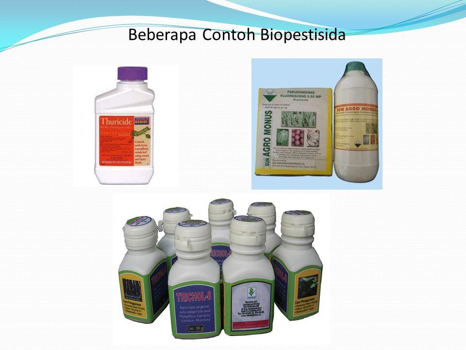 Pseudomonas fluorescens Sebagai Agens Biokontrol Merupakan bakteri gram negatif yang berbentuk batang yang menghuni tanah, tanaman dan air, bakteri in
