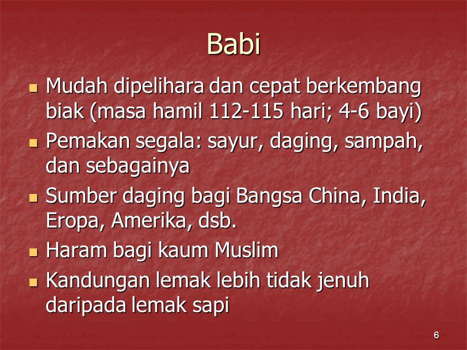 6 Babi Mudah dipelihara dan cepat berkembang biak (masa hamil 112-115 hari; 4-6 bayi) Mudah dipelihara dan cepat berkembang biak (masa hamil 112-115 h
