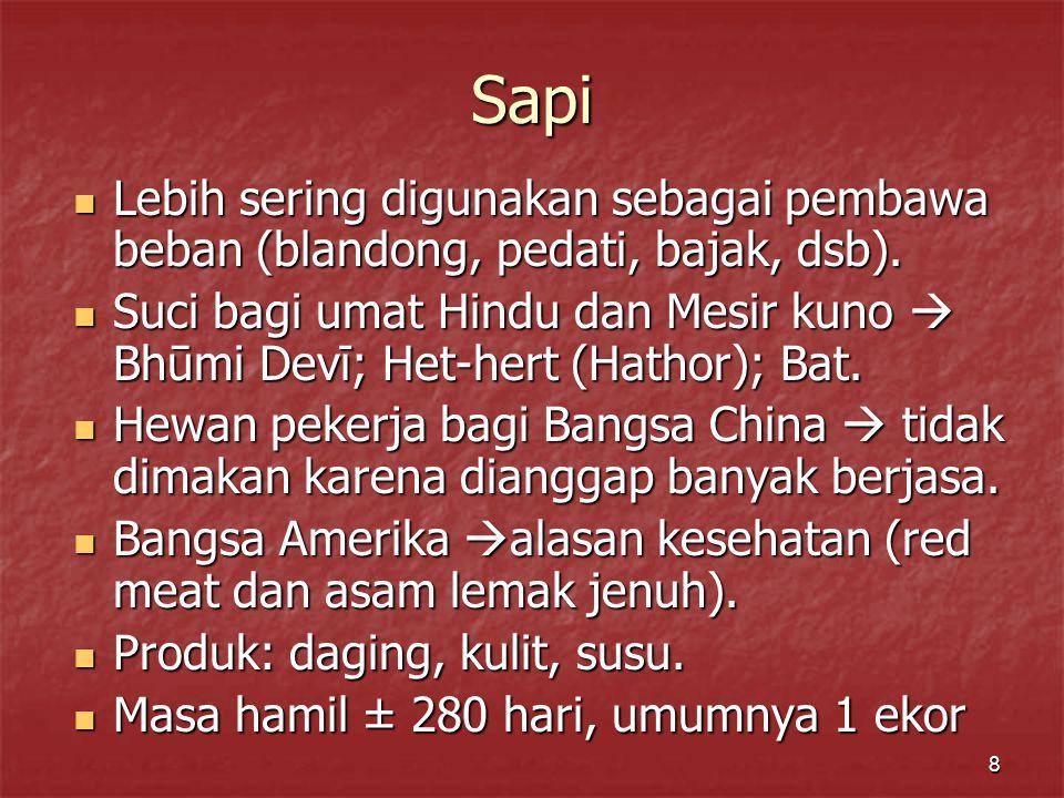 8 Sapi Lebih sering digunakan sebagai pembawa beban (blandong, pedati, bajak, dsb).
